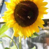 Ziedkopu veidi un ziedu dažādība floristikā