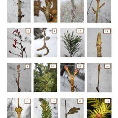 Krustvārdu mīkla – vai Tu pazīsti kokus un krūmus?