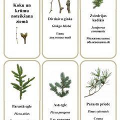 Koku un krūmu zaru noteicējs – ziemā